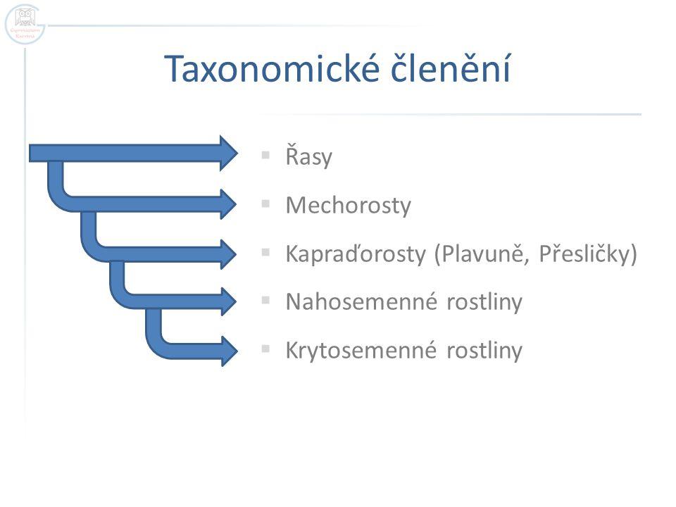 Taxonomické členění Řasy Mechorosty Kapraďorosty (Plavuně, Přesličky)