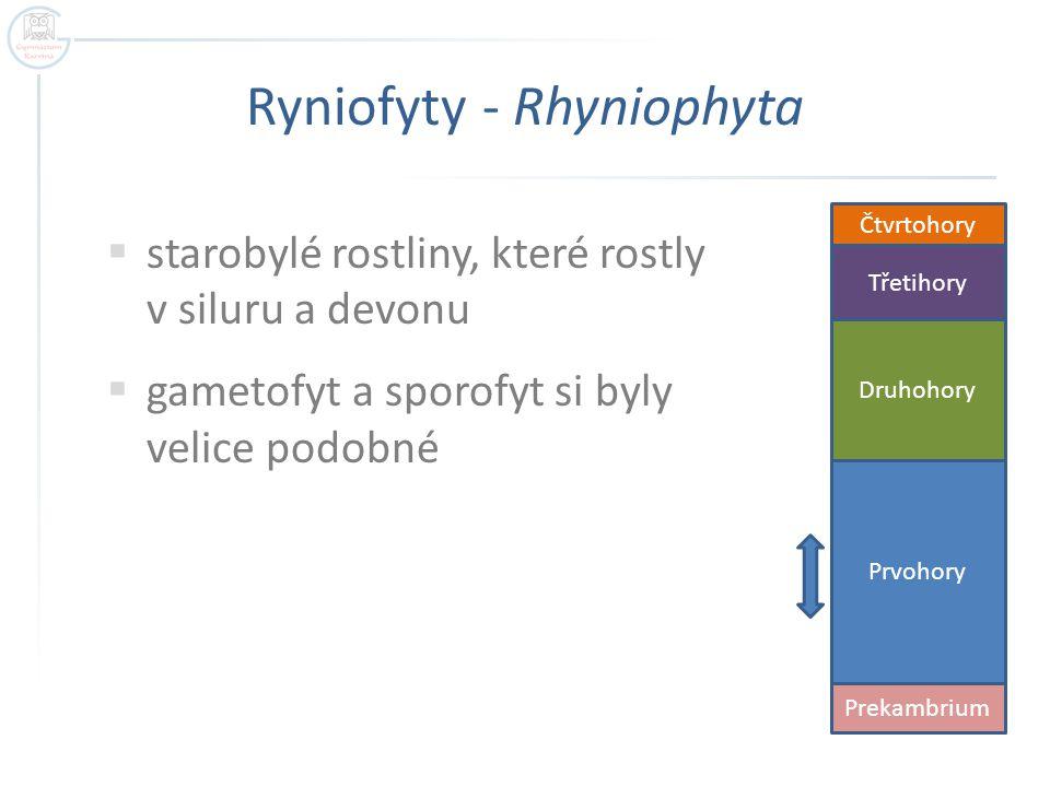 Ryniofyty - Rhyniophyta