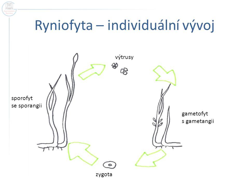 Ryniofyta – individuální vývoj