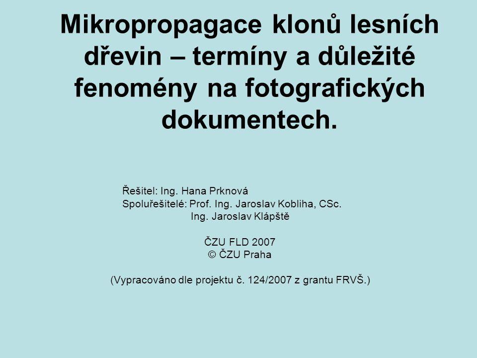 (Vypracováno dle projektu č. 124/2007 z grantu FRVŠ.)