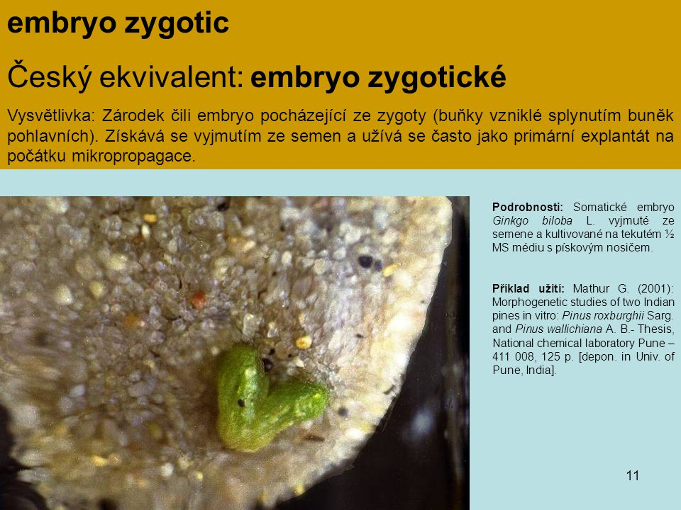 Český ekvivalent: embryo zygotické
