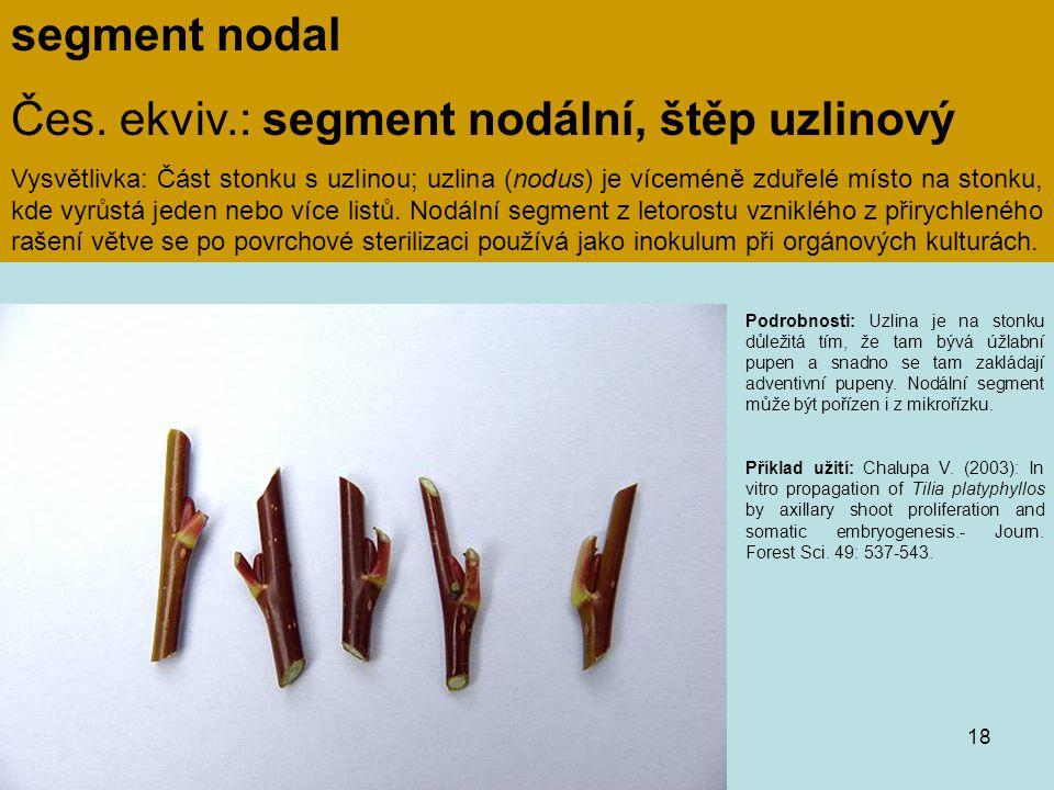 Čes. ekviv.: segment nodální, štěp uzlinový