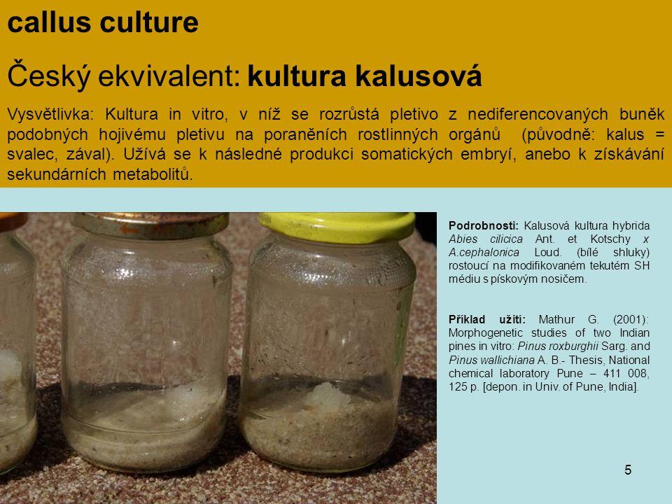 Český ekvivalent: kultura kalusová