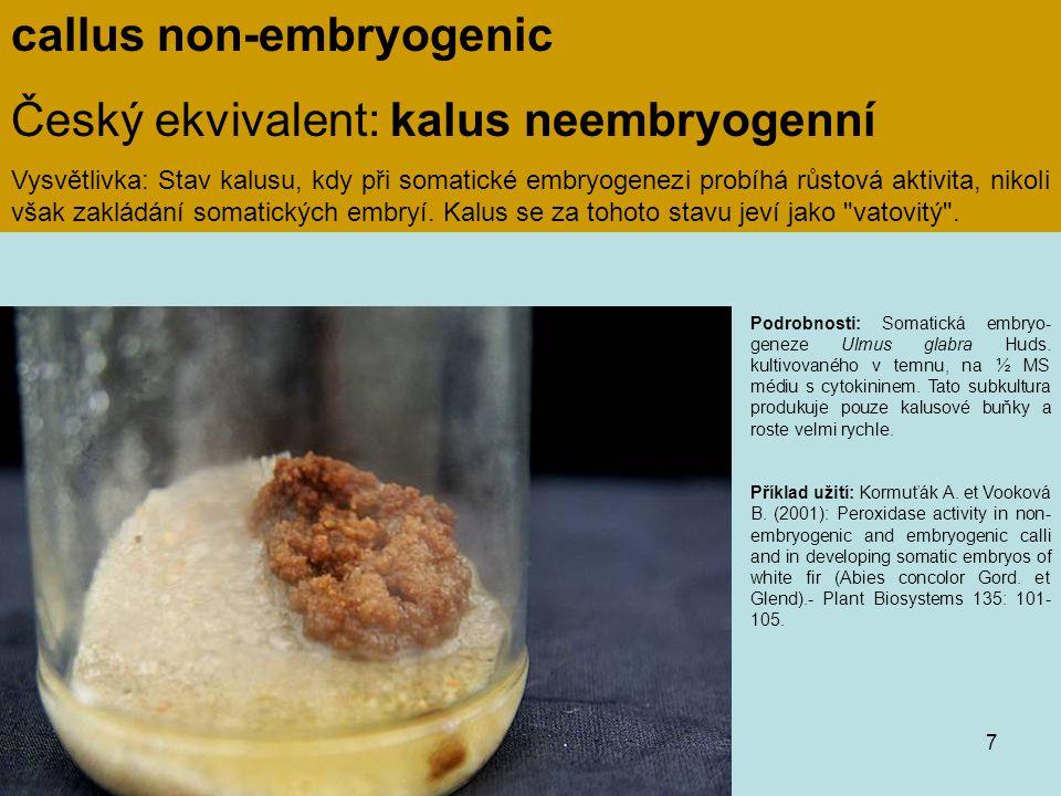 callus non-embryogenic Český ekvivalent: kalus neembryogenní