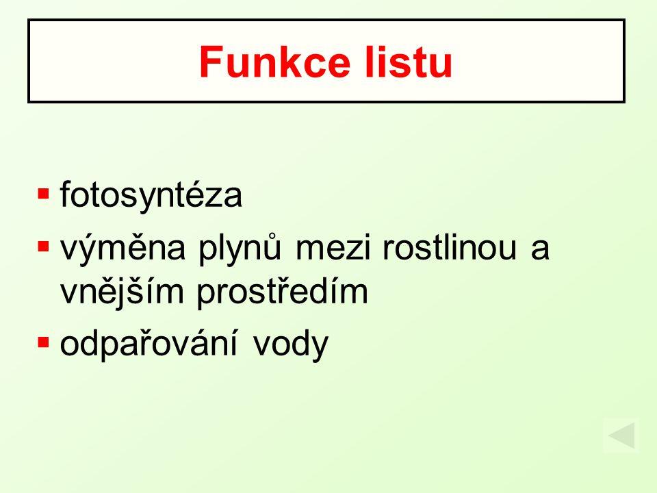 Funkce listu fotosyntéza