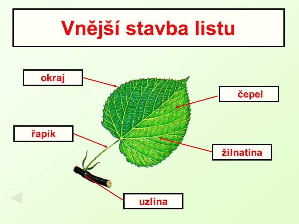 Vnější stavba listu okraj čepel řapík žilnatina uzlina