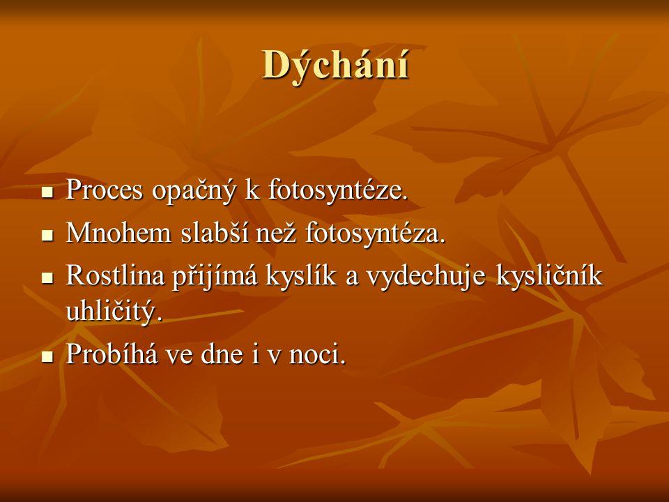 Dýchání Proces opačný k fotosyntéze. Mnohem slabší než fotosyntéza.