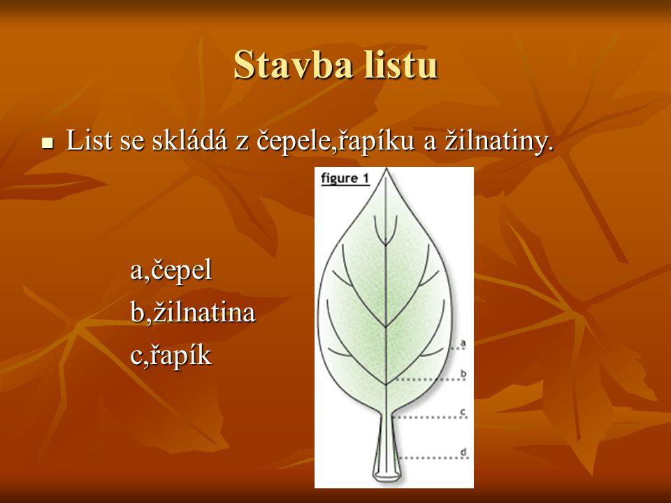 Stavba listu List se skládá z čepele,řapíku a žilnatiny. a,čepel