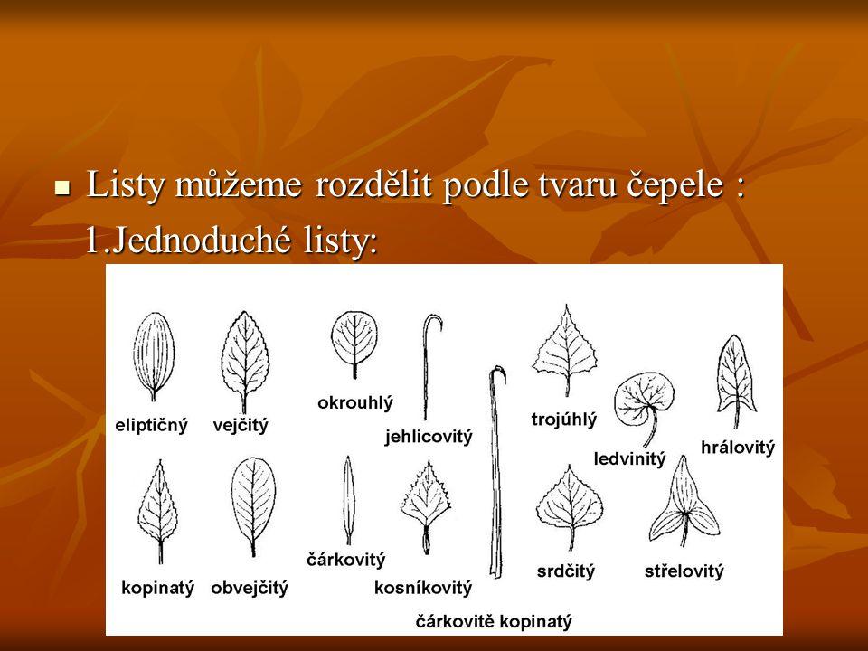 Listy můžeme rozdělit podle tvaru čepele :