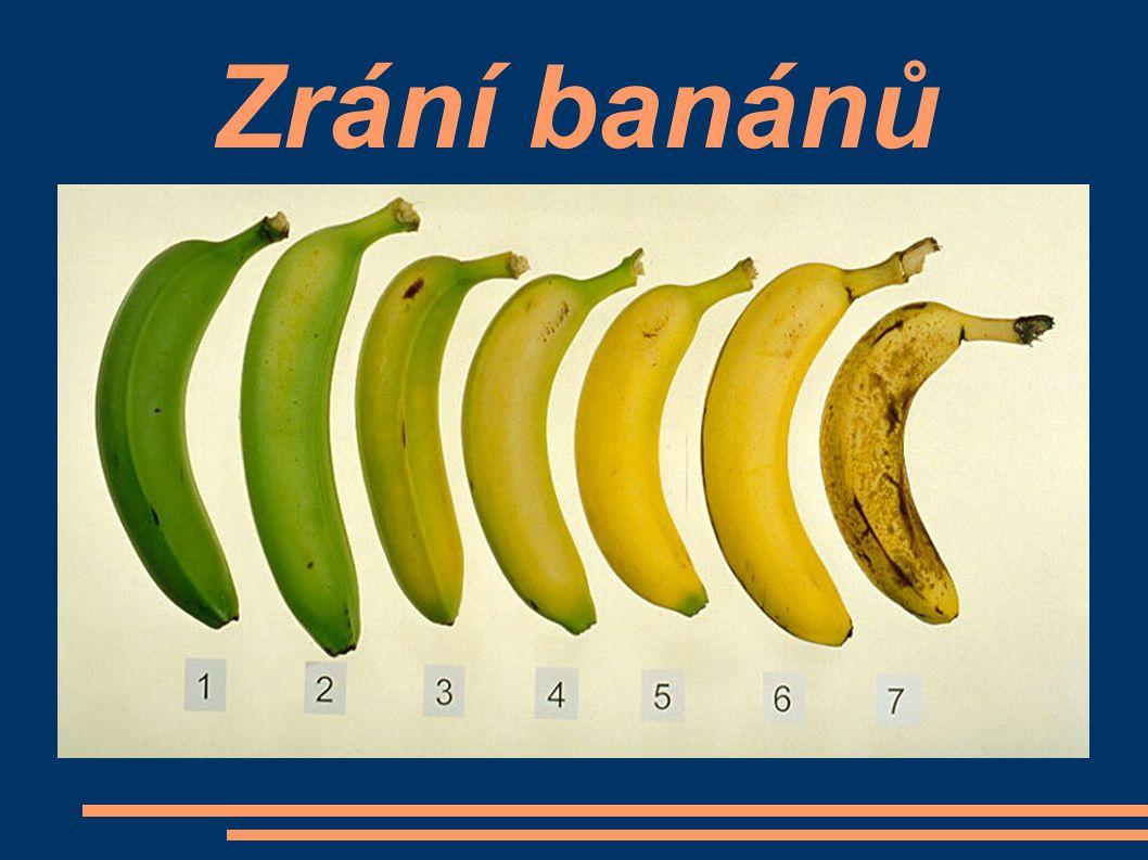 Zrání banánů
