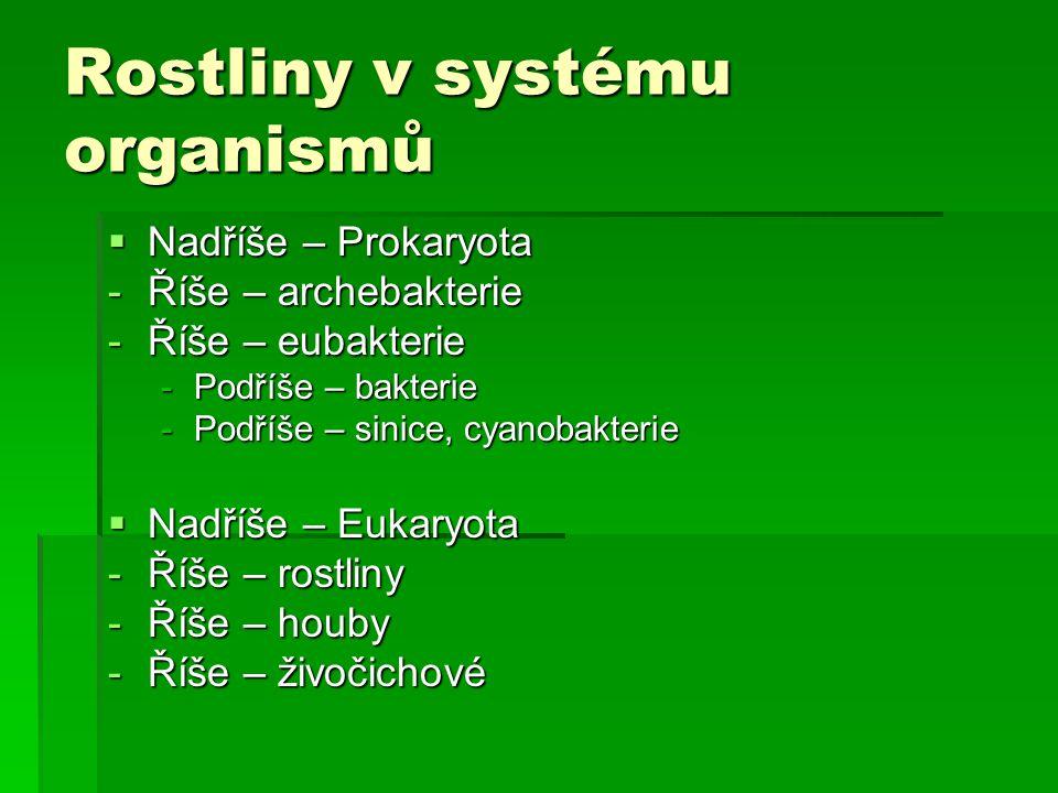 Rostliny v systému organismů