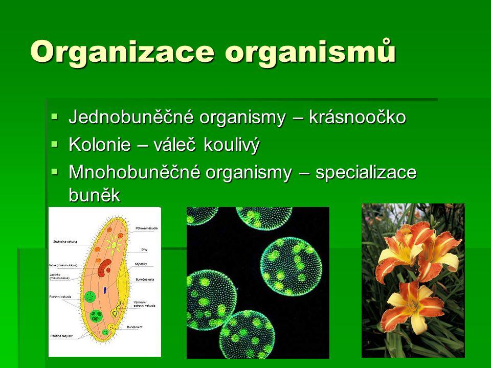 Organizace organismů Jednobuněčné organismy – krásnoočko