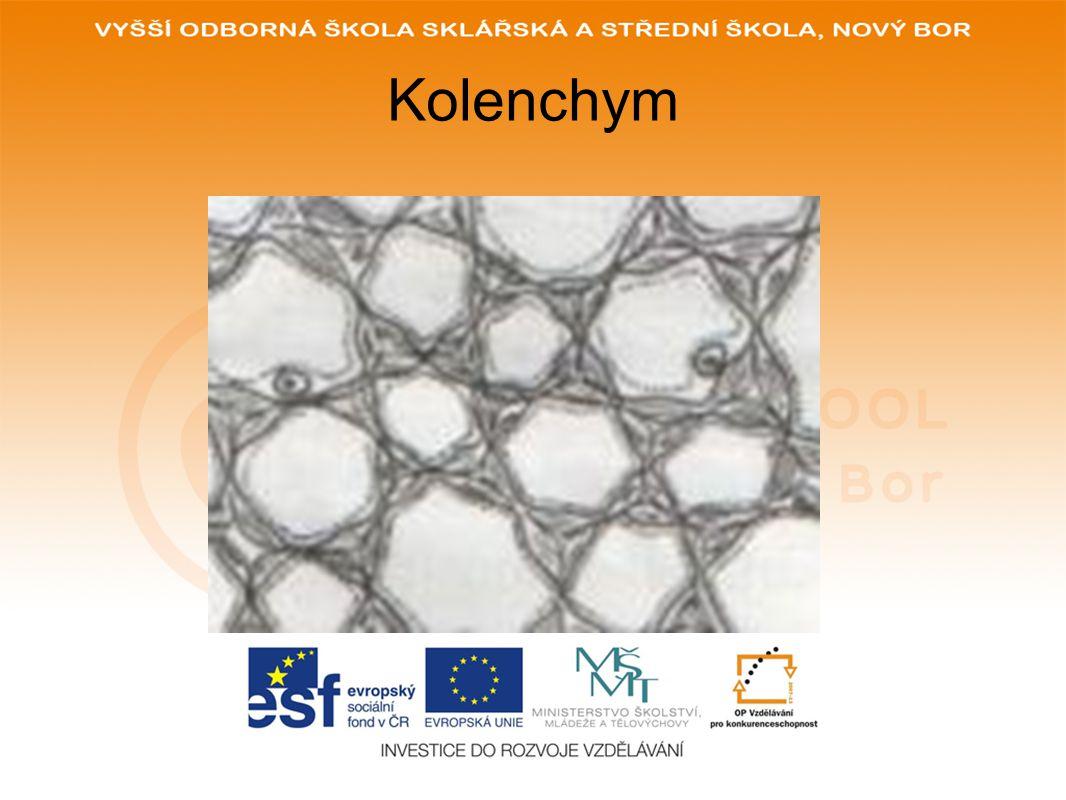 Kolenchym
