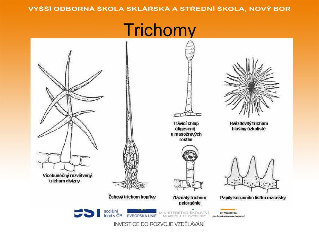 Trichomy