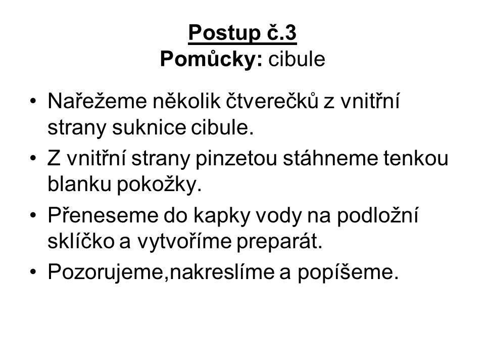 Postup č.3 Pomůcky: cibule