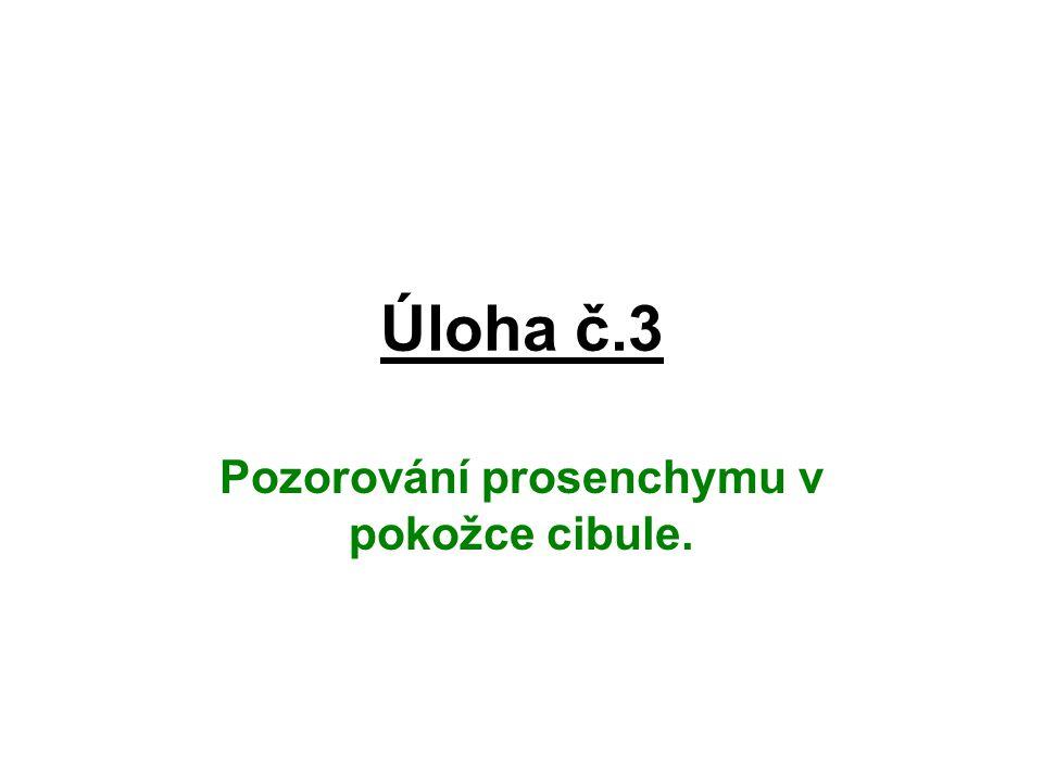 Pozorování prosenchymu v pokožce cibule.