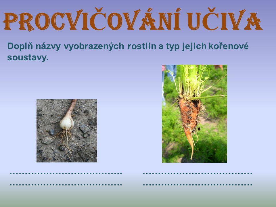 ProcVIČOVÁNÍ UČIVA Doplň názvy vyobrazených rostlin a typ jejich kořenové soustavy.