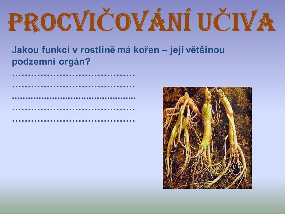 ProcVIČOVÁNÍ UČIVA Jakou funkci v rostlině má kořen – její většinou podzemní orgán.