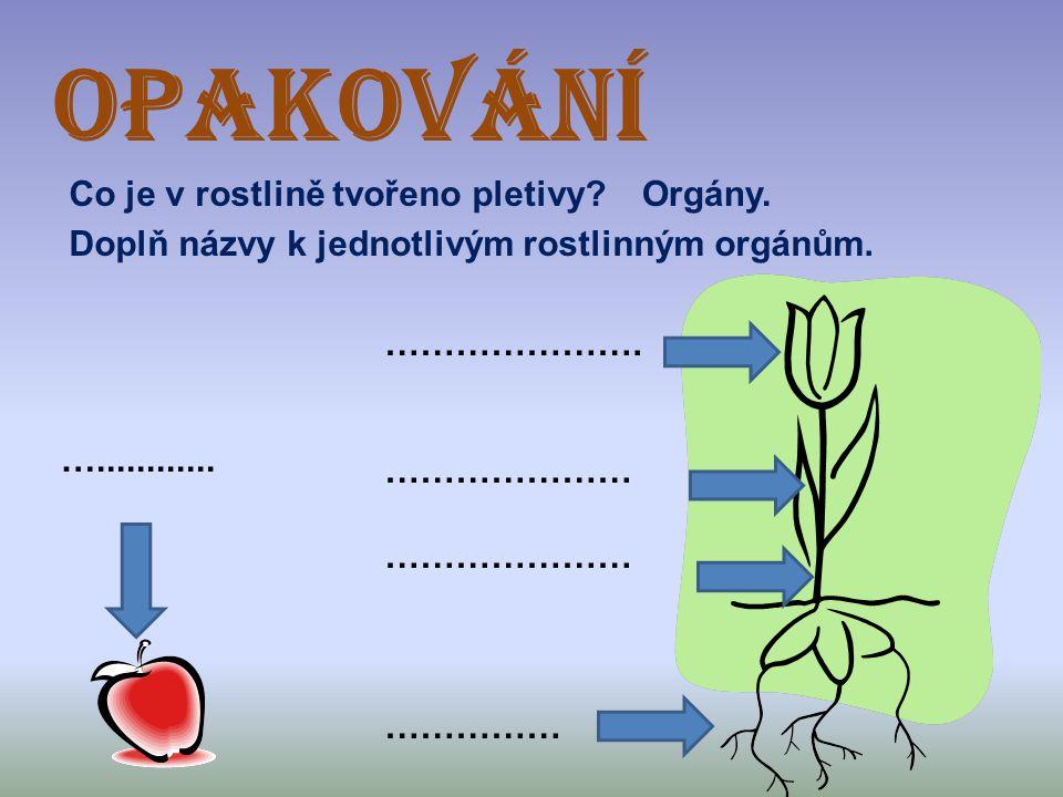 OPAKOVÁNÍ Co je v rostlině tvořeno pletivy Orgány.