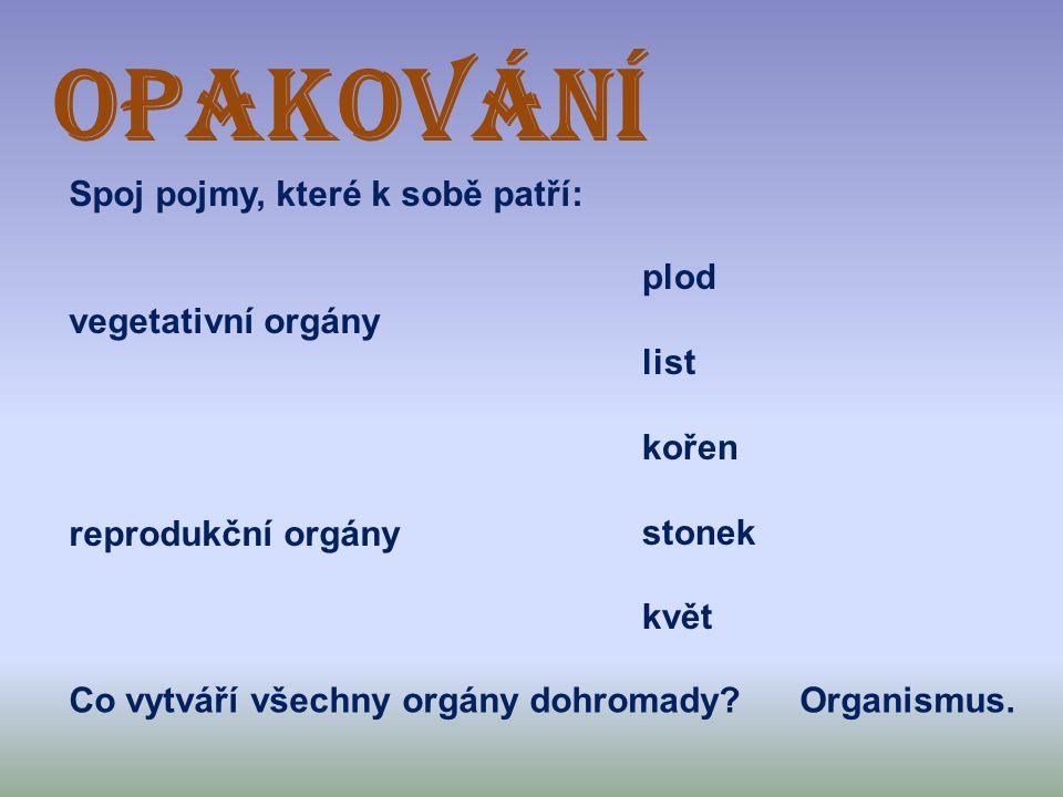 OPAKOVÁNÍ Spoj pojmy, které k sobě patří: vegetativní orgány
