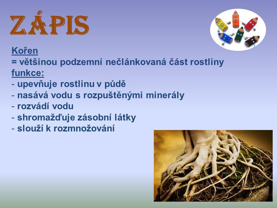 ZÁPIS Kořen = většinou podzemní nečlánkovaná část rostliny funkce: