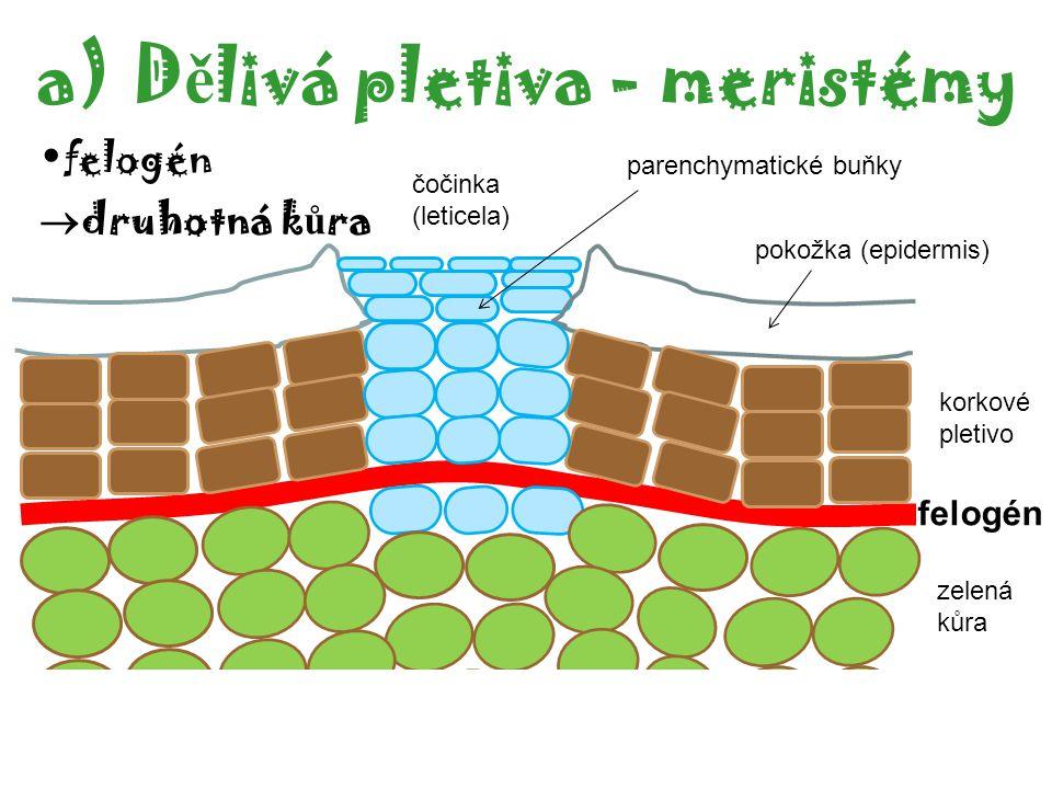 Dělivá pletiva - meristémy