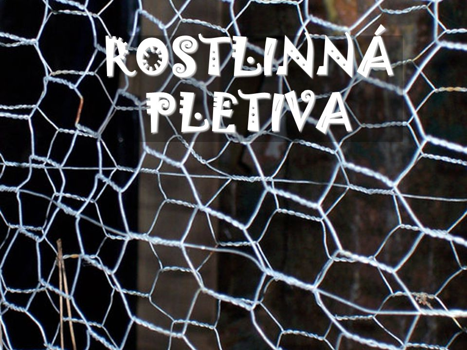 ROSTLINNÁ PLETIVA autor: English Wikipedia