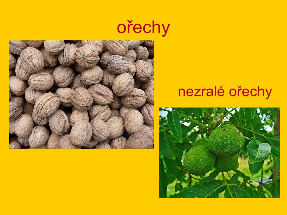 ořechy nezralé ořechy