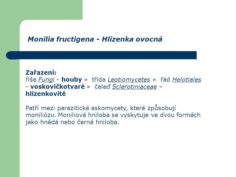 Monilia fructigena - Hlízenka ovocná