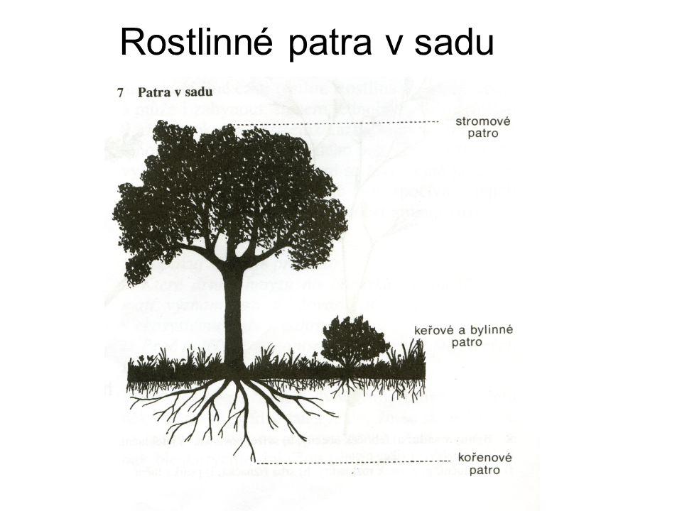 Rostlinné patra v sadu