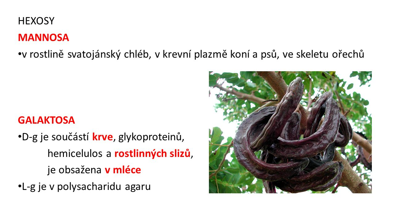 HEXOSY MANNOSA. v rostlině svatojánský chléb, v krevní plazmě koní a psů, ve skeletu ořechů. GALAKTOSA.