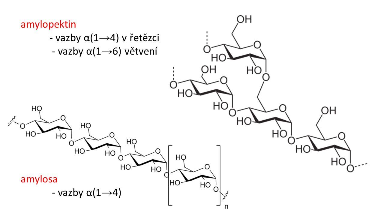 amylopektin - vazby α(1→4) v řetězci - vazby α(1→6) větvení amylosa - vazby α(1→4)