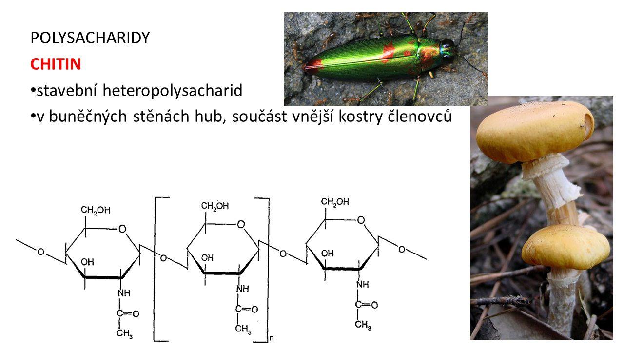 POLYSACHARIDY CHITIN. stavební heteropolysacharid.