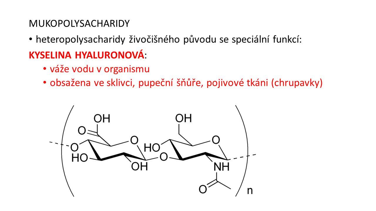MUKOPOLYSACHARIDY heteropolysacharidy živočišného původu se speciální funkcí: KYSELINA HYALURONOVÁ: