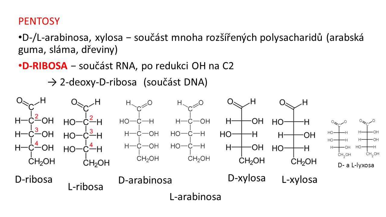D-RIBOSA − součást RNA, po redukci OH na C2