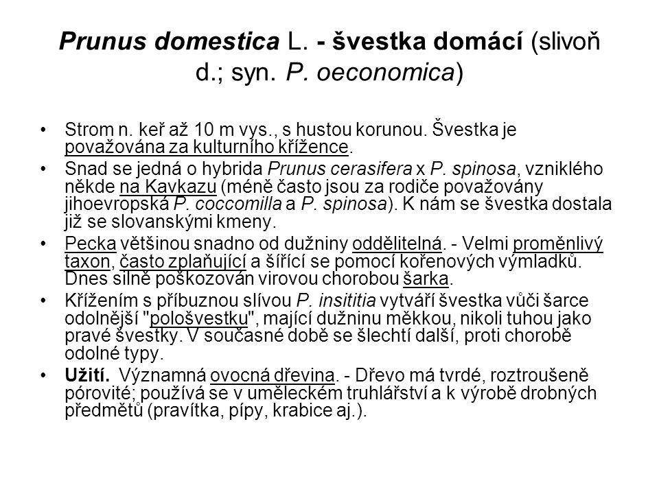 Prunus domestica L. - švestka domácí (slivoň d.; syn. P. oeconomica)