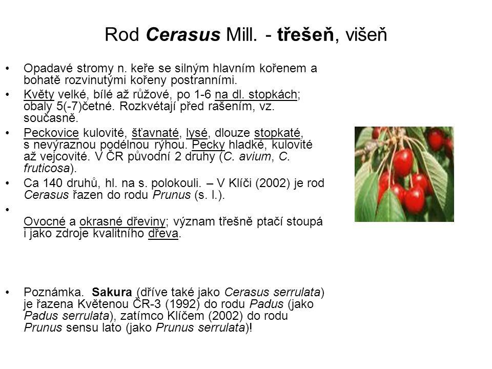 Rod Cerasus Mill. - třešeň, višeň