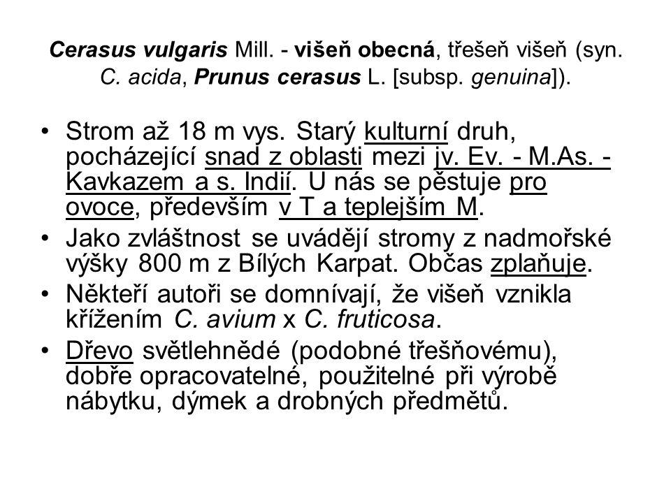 Cerasus vulgaris Mill. - višeň obecná, třešeň višeň (syn. C