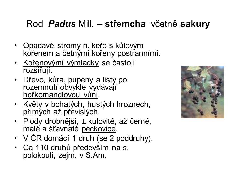 Rod Padus Mill. – střemcha, včetně sakury