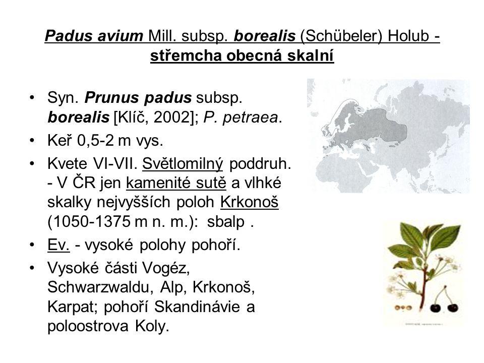 Padus avium Mill. subsp. borealis (Schübeler) Holub - střemcha obecná skalní