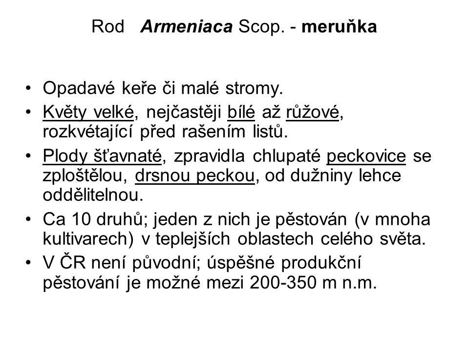 Rod Armeniaca Scop. - meruňka