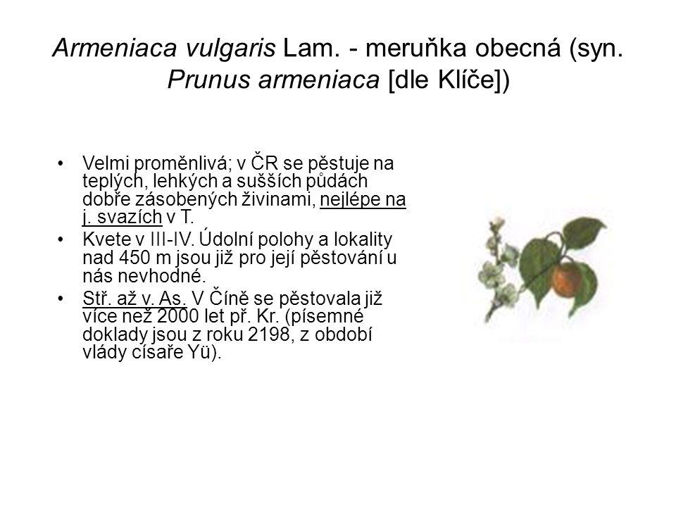 Armeniaca vulgaris Lam. - meruňka obecná (syn