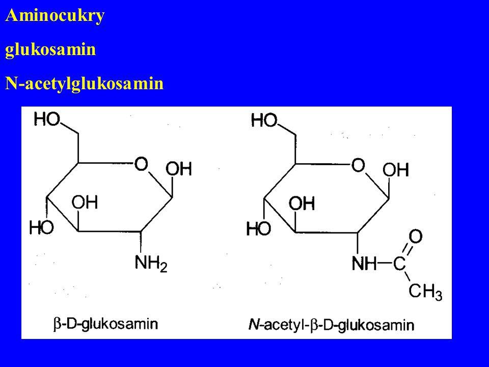 Aminocukry glukosamin N-acetylglukosamin
