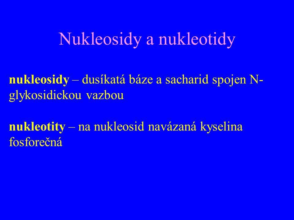 Nukleosidy a nukleotidy