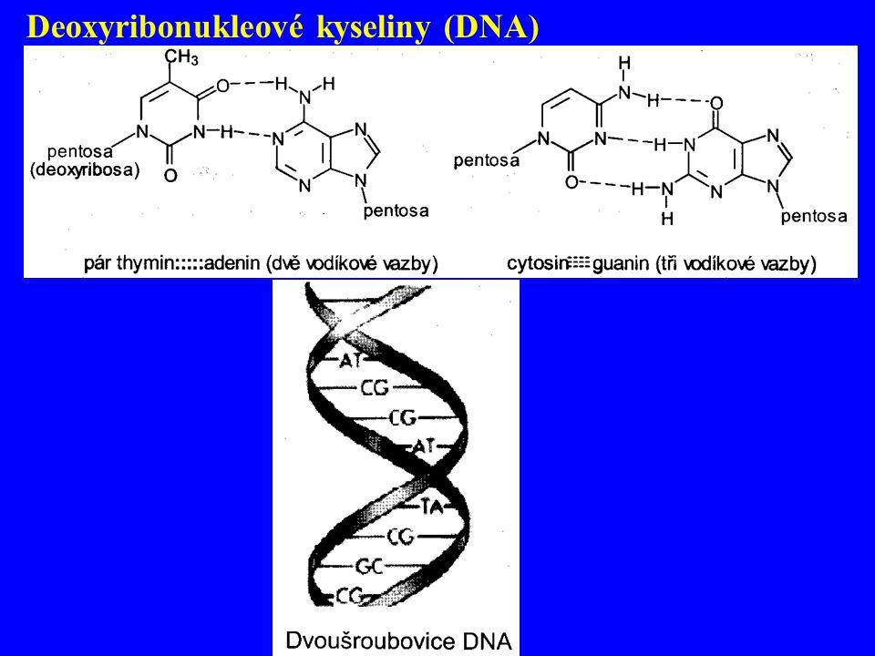 Deoxyribonukleové kyseliny (DNA)