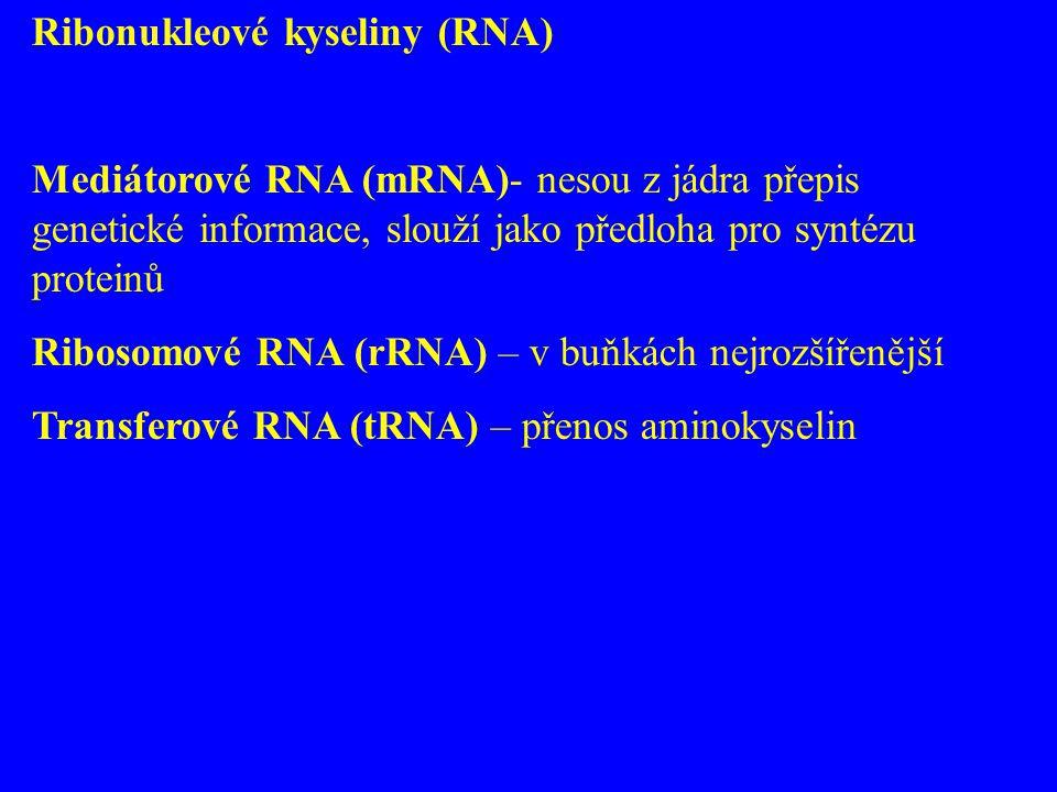 Ribonukleové kyseliny (RNA)