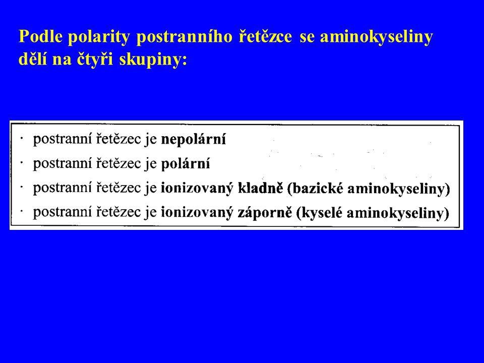 Podle polarity postranního řetězce se aminokyseliny dělí na čtyři skupiny: