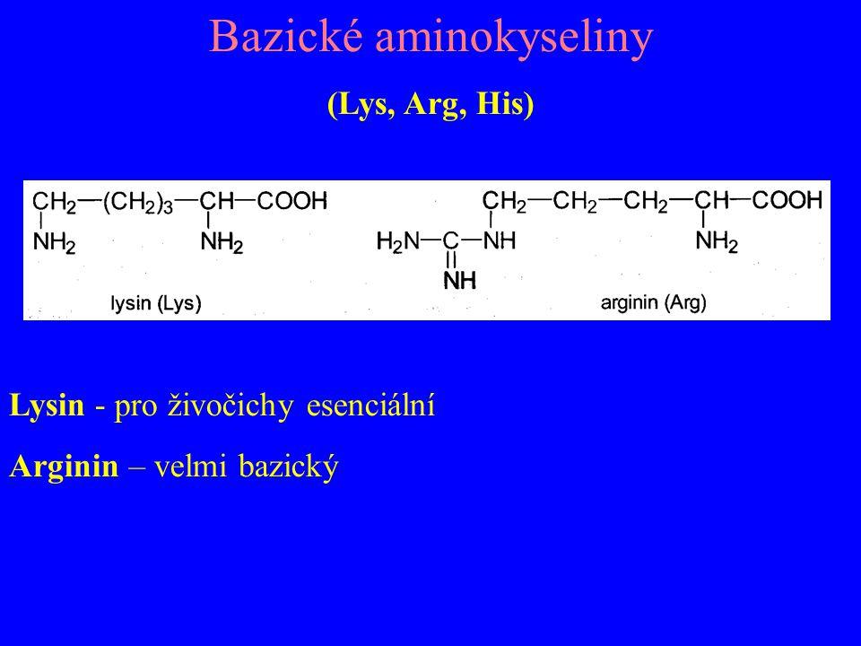 Bazické aminokyseliny