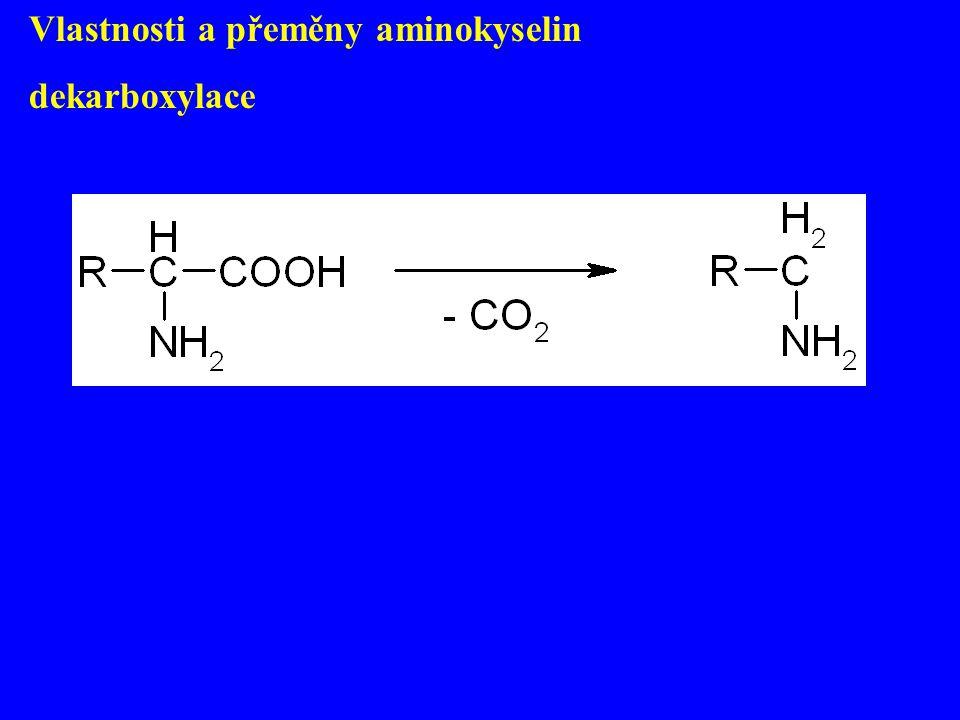 Vlastnosti a přeměny aminokyselin