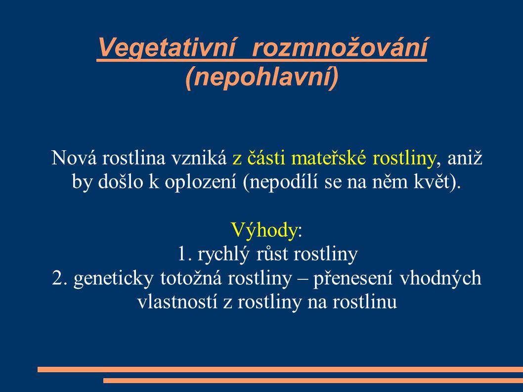 Vegetativní rozmnožování (nepohlavní)